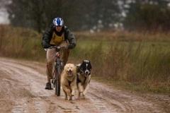 Compétition de  cani vtt - Anthony Coffre