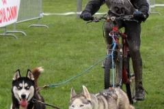Entrainement - Pierryck Coffre et ses 2 chiennes